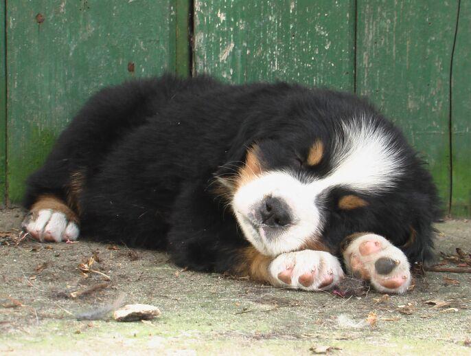 Ndeze pup heeft het wel heel goed hij droomt zacht